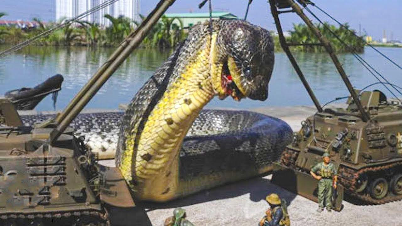 10 Biggest Creatures Ever Captured