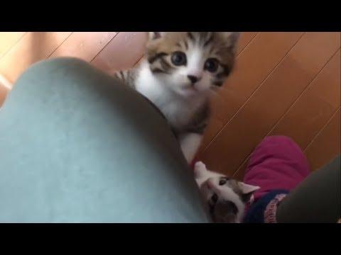 大好きなお母さんに集まる子猫たちがかわいい
