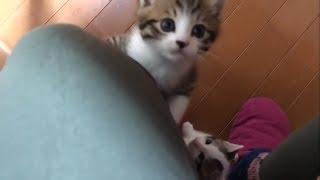 大好きなお母さんに集まる子猫たちがかわいい thumbnail