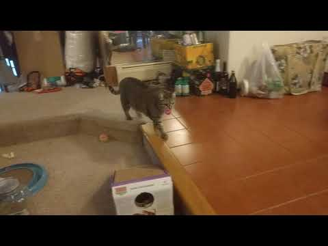 Fetching Wrangler