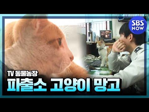 SBS [동물농장] - 망원경찰서의 망고경찰냥이