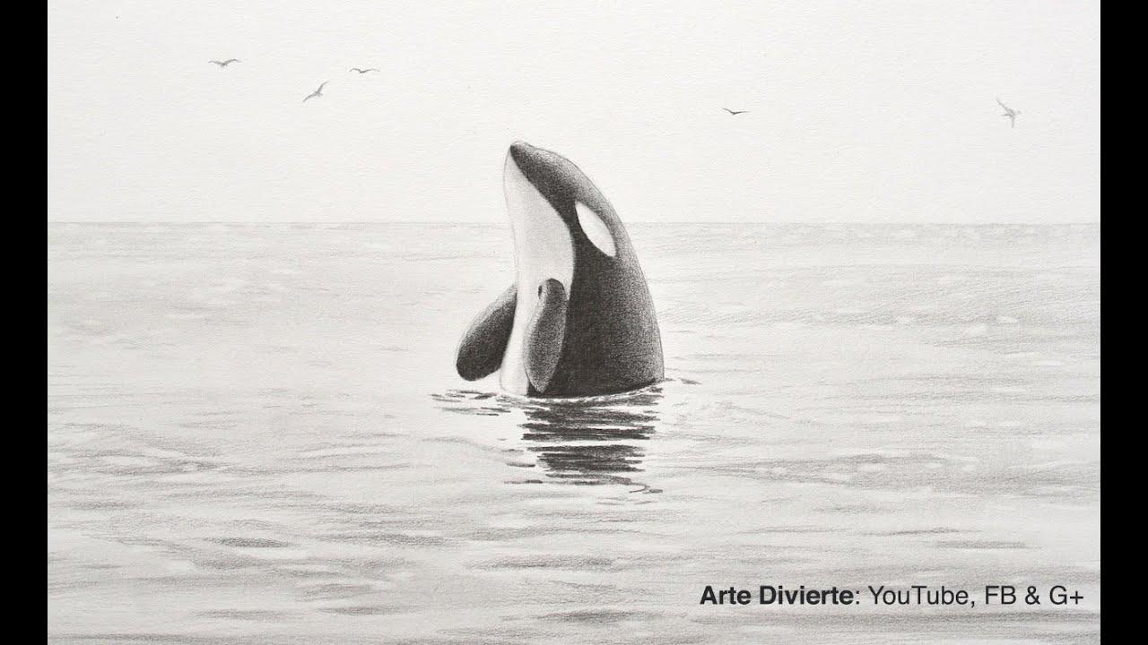 Cómo dibujar una Ballena Orca - YouTube