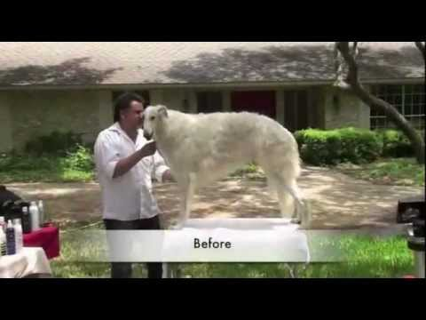 Grooming the Borzoi - Part 1