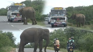 Wild elephant searching for food inside a bus !