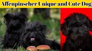 Affenpinscher Unique and Cute Dog #short #shorts #dog breed