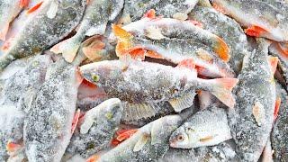 Вот что Нужно было Окуню НАДО БЫЛО СРАЗУ ТАК ЛОВИТЬ Зимняя рыбалка Танай