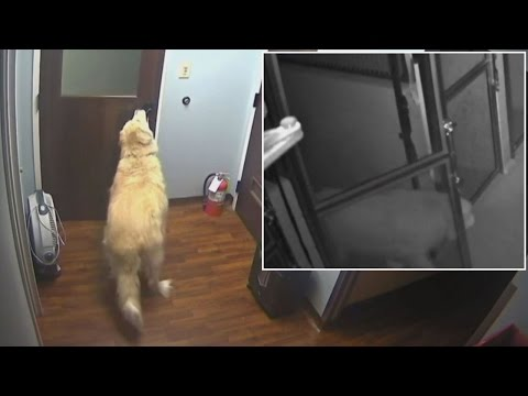 How This Clever Dog Escaped From The Kennel While Family Was On Vacation