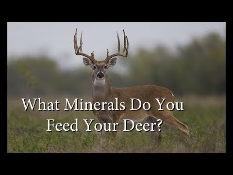 The Best Minerals For Antler Growth And Digestive Health!
