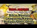 Terapi Pleci Bikin Ngotot Bunyi  Mp3 - Mp4 Download