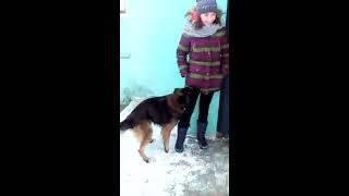 Прикол #1 Собака насилует Кипариску