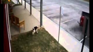 Il abandonne son chien sur un parking