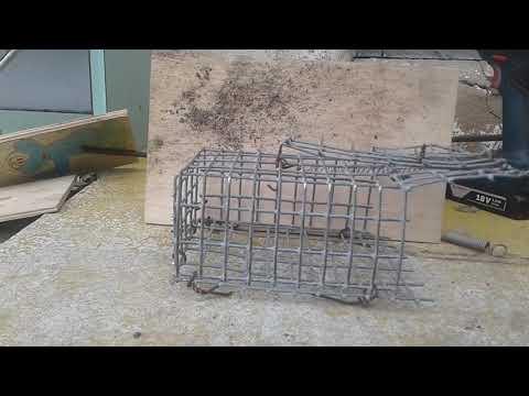 Избавиться от мышей и крыс. Средство от грызунов. Как избавиться от грызунов в своем доме.