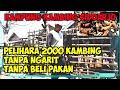 Pelihara 2000 ekor kambing tanpa ngarit tanpa beli pakan - Kampung kambing di Sidoarjo
