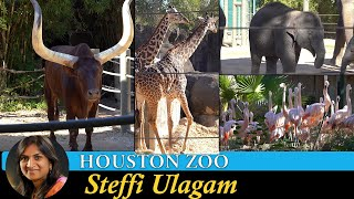 Houston Zoo Tour in Tamil | Ankola Bull , Anaconda, Anteater, Flamingo, Giraffe
