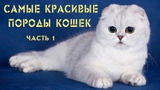 Самые красивые породы кошек. Часть 1