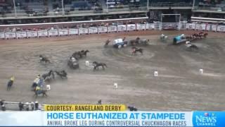 Horse dies at the Calgary Stampede 2015 7/5/2015