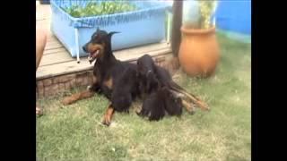 Cachorros 13 De Enero 1