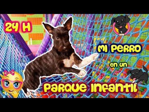 Perro pasa 24 horas en un ¡PARQUE INFANTIL! BALL PIT / Piscina de Bolas / Lana