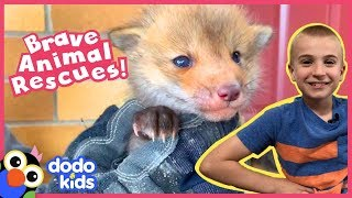 The Bravest Boldest Animal Rescues You'll Ever See | 1 Hour of Animal Videos For Kids | Dodo Kids