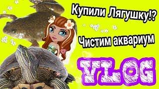 VLOG: Купили Лягушку?! ☆ Уборка в аквариуме у черепах