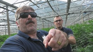Mega Greenhouse Company X Switzerland 🇨🇭