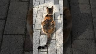 고양이 잡곡식빵