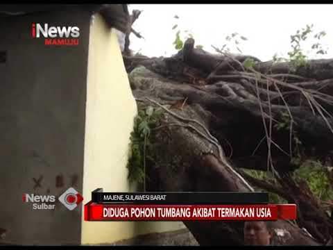 Pohon Tumbang Menimpa Rumah   INews Sulbar   31-12-2018
