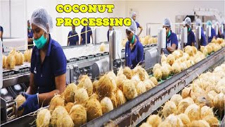 Inside COCONUT Processing in Modern Factory - Coconut Oil, Milk and Flour - Coconut Process Plant