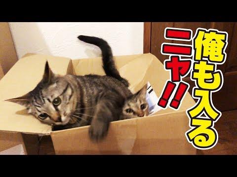 帰省ラッシュでもないのに箱が猫さんで大渋滞!