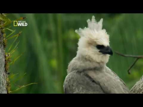 Amazônia Selvagem - Reino Animal (Dublado): Documentário National Geographic