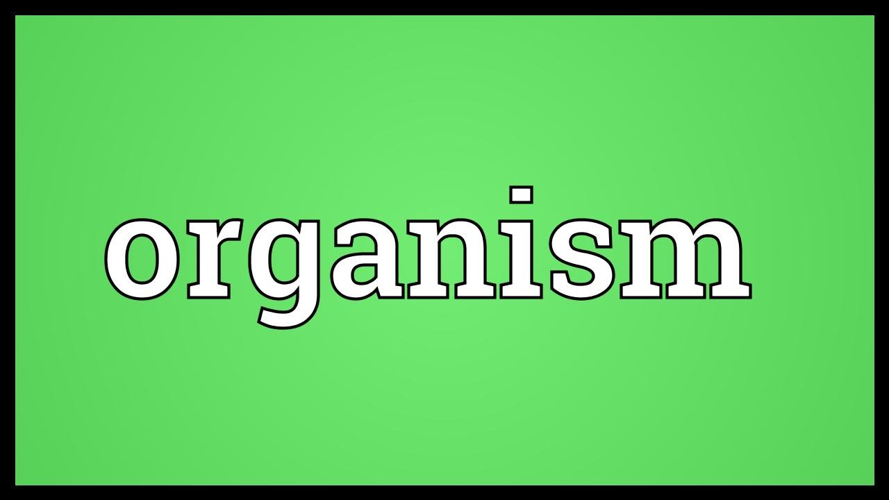 organism meaning youtube