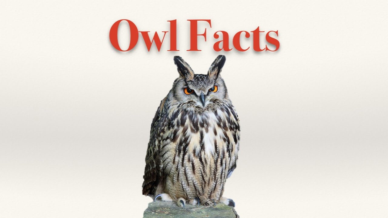 Owl Facts - YouTube