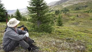 Wolverine running across Snake Indian Pass/Jasper Nat Park/Canadian Rockies North Boundary Trail