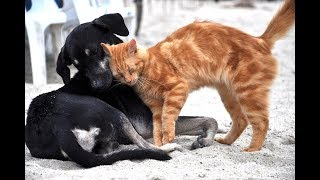 Funny Dogs and Cats videos compilations-Cute Moments of Animals