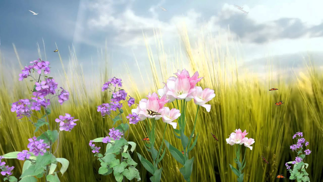 3d Moving Animation Wallpaper Download Butterfly Paradise Animated Wallpaper Http Www