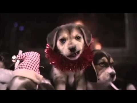 frohe weihnachten merry christmas kleine hunde small dogs youtube