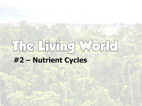 Living World - Nutrient Cycles
