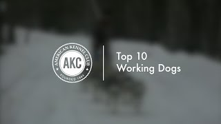 10 Top Working Dogs