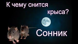 Толкование снов про крысу неоднозначное.