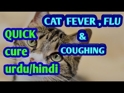 CATS FLU FEVER AND COUGHING QUICK CURE HINDI / URDU 2018