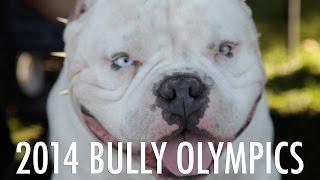 AMERICAN BULLY SHOW - 2014 BULLY OLYMPICS