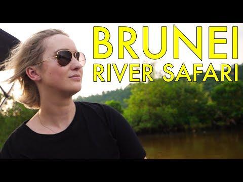 INCREDIBLE Brunei River Safari