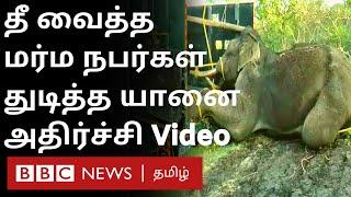Shocking Video: எரியும் டயரை யானை மீது எரிந்த மர்ம நபர்கள்;அதிர்ச்சியளிக்கும் வீடியோ | Nilgiris