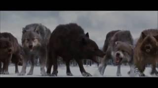 Сумерки волки