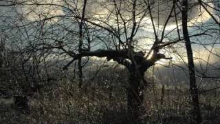 Bend Down the Branches - Tom Waits