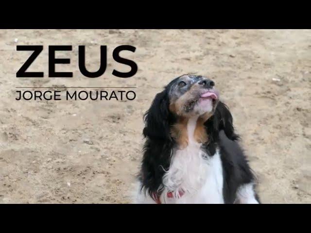Eu sou o ZEUS