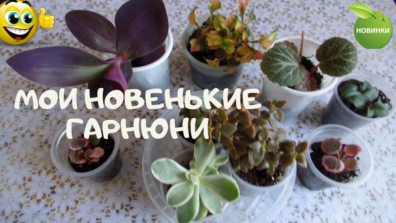 Получила новенькие растения почтой  и прикупила на цветочном рынке замечательные крассулы