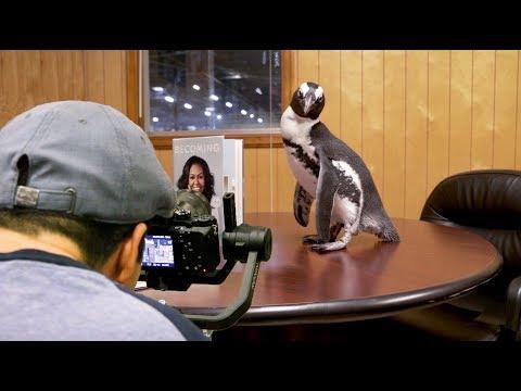"Behind the Scenes: A Real Penguin's ""Internship"" at Penguin Random House"