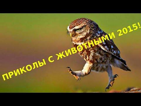 Видео Забавные животные - 123 видео смотреть онлайн в Моем