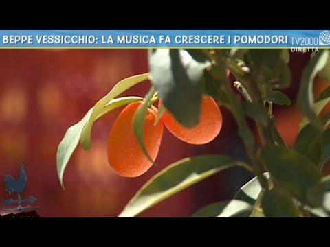 Beppe Vessicchio: la musica fa crescere i pomodori